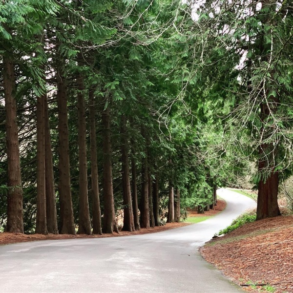 Washington Park Arboretum, Seattle